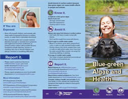Blue-green Algae and Health Brochure