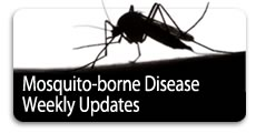 mosquito-borne disease info