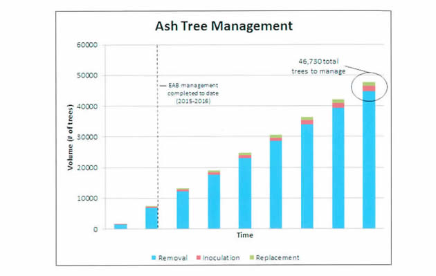 Ash Tree Management Chart