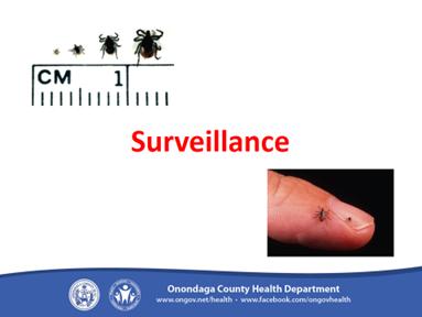 Lyme Disease 15