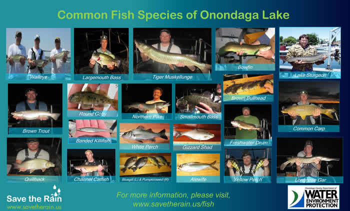 Fish of Onondaga Lake